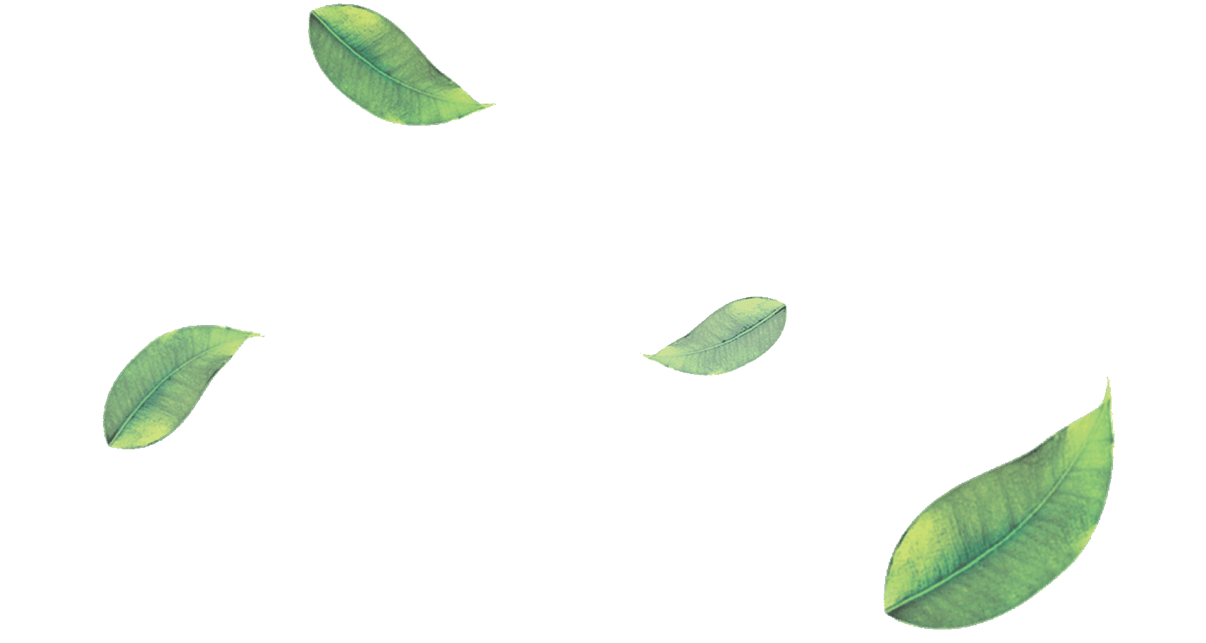 Free Download Png And Vector: Vector Free Png Leaf Download #38628