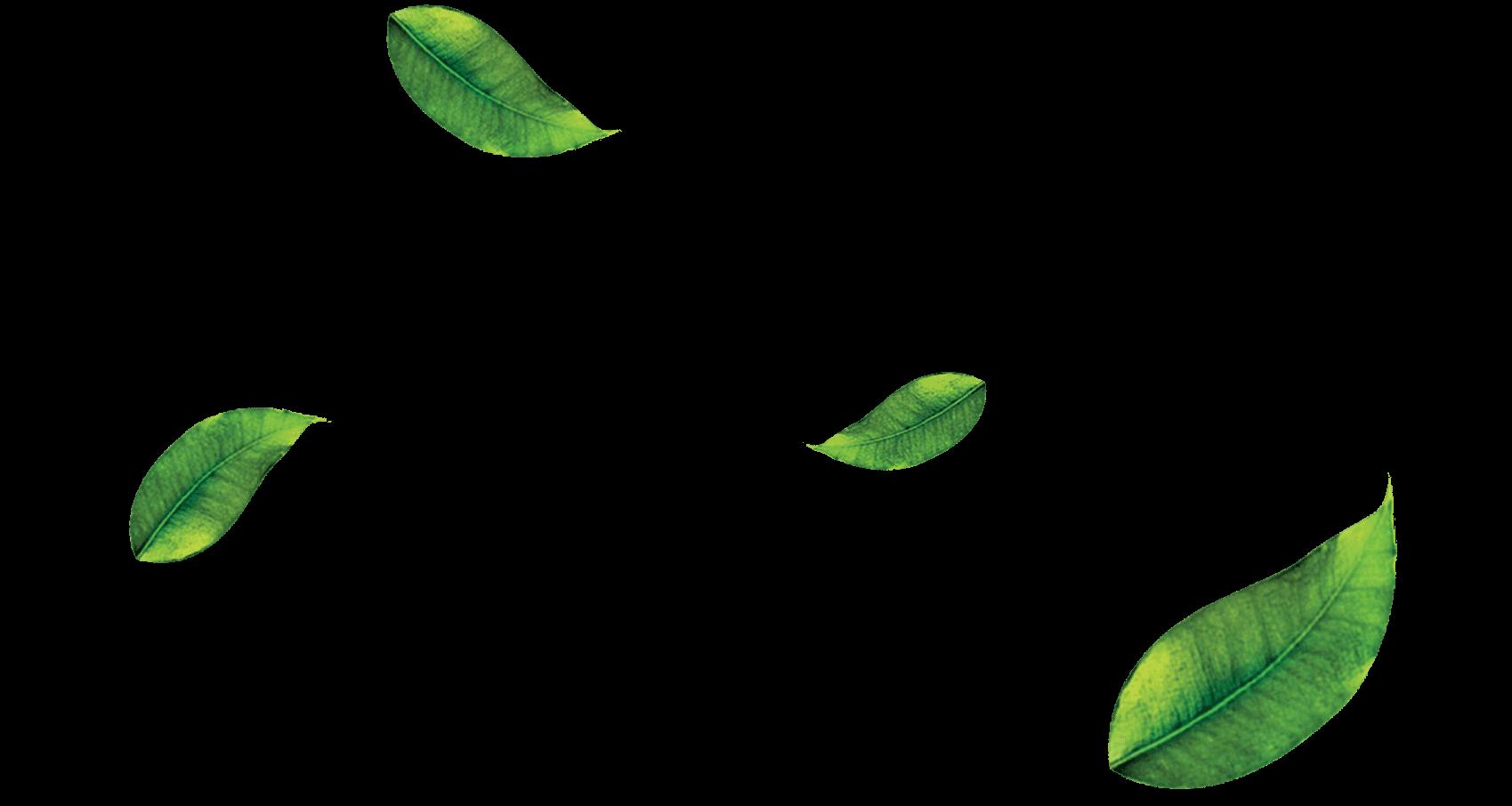 Leaf Png image #38628