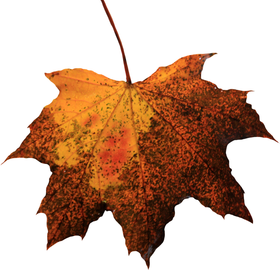 Leaf Picture PNG image #38630