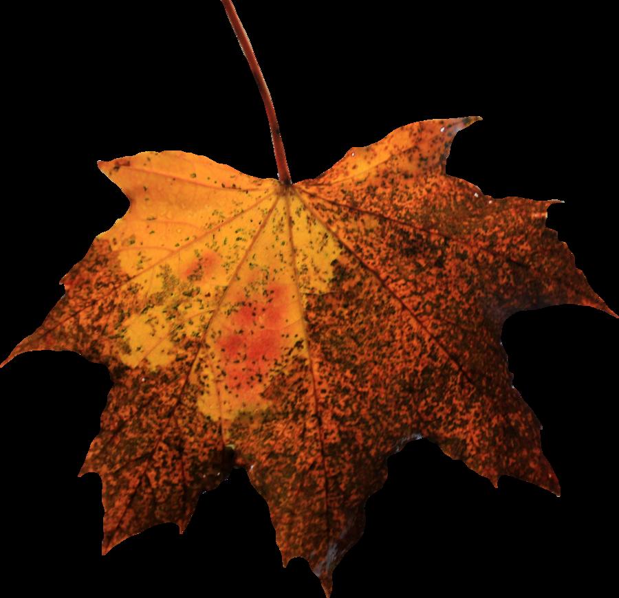 Leaf Png image #38630