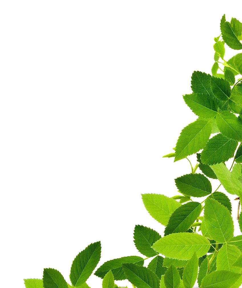Leaf Png image #38631
