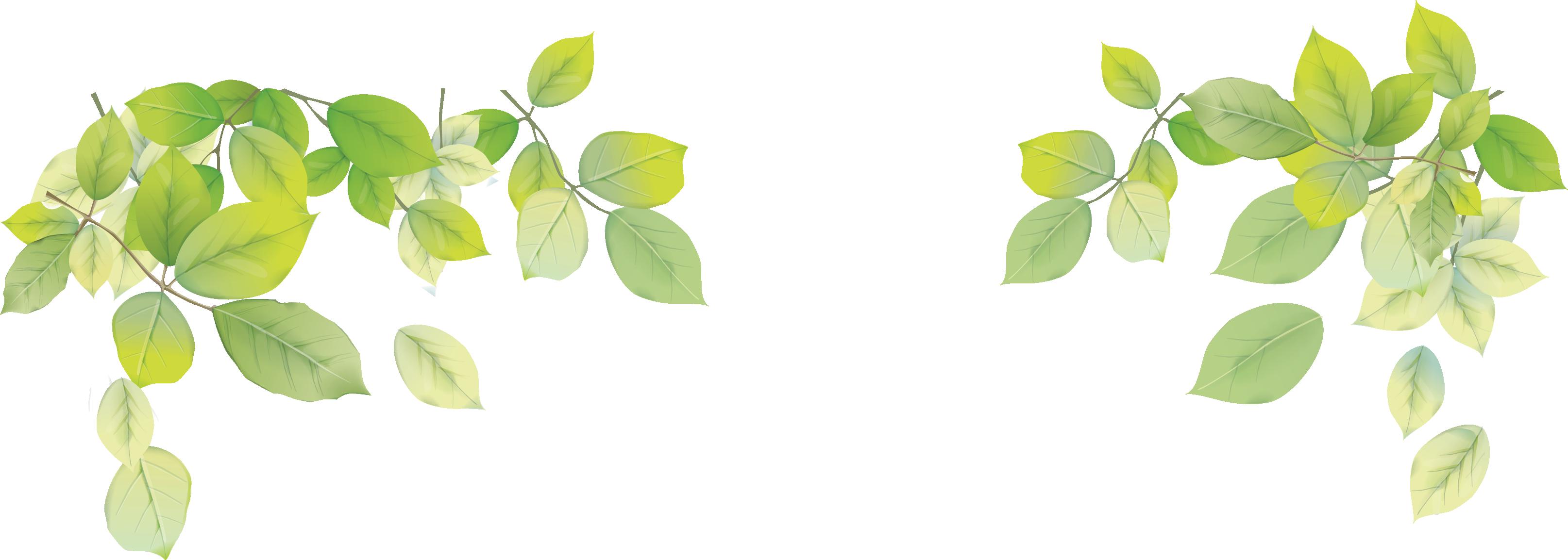 Leaf Png image #38636