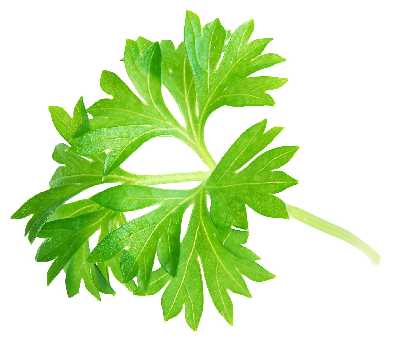 Leaf Png image #38637