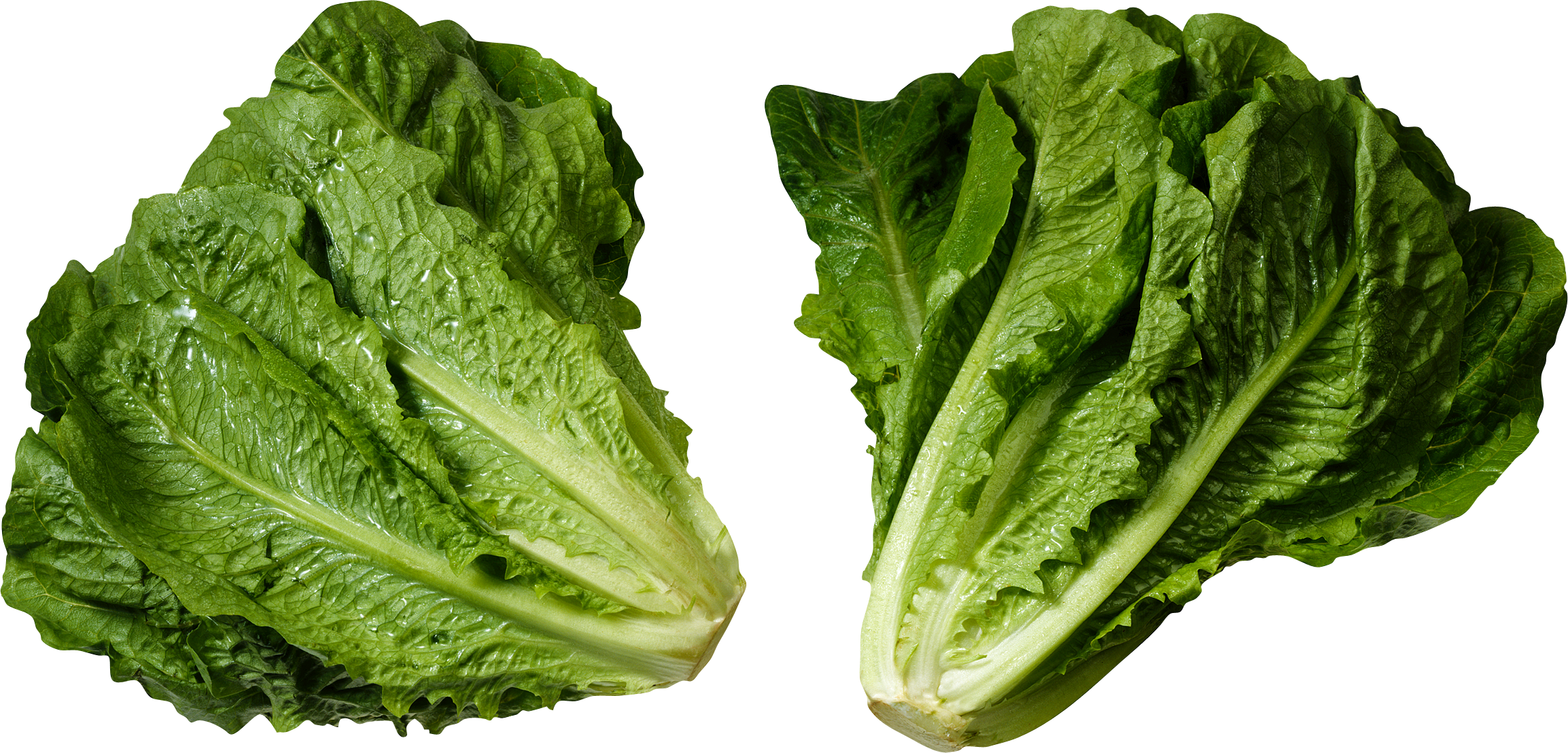 Lettuce Salad PNG image picture