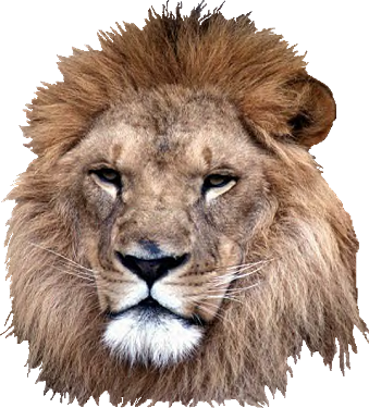 Picture Download Lion Head