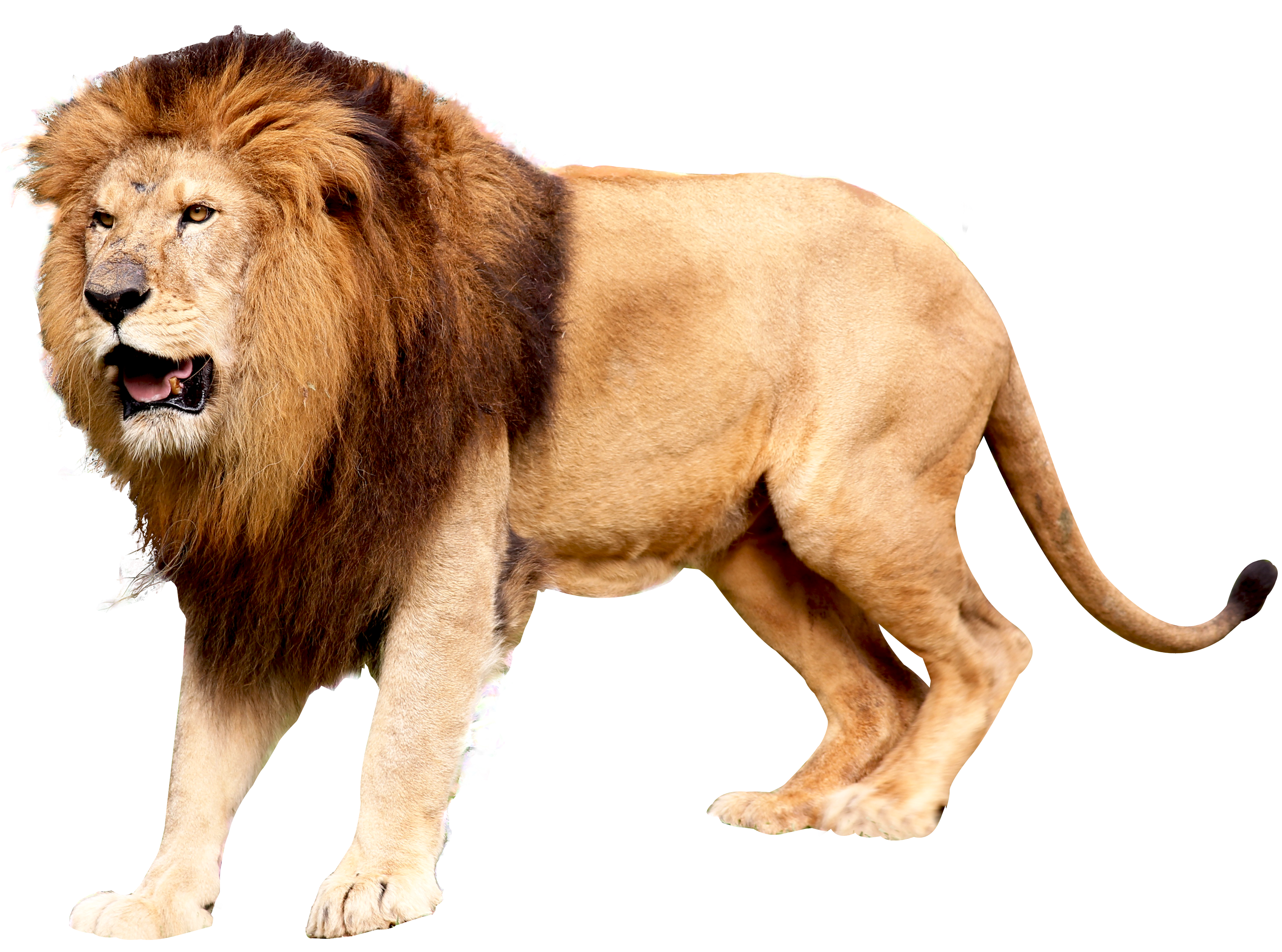 Download Lion Head Icon