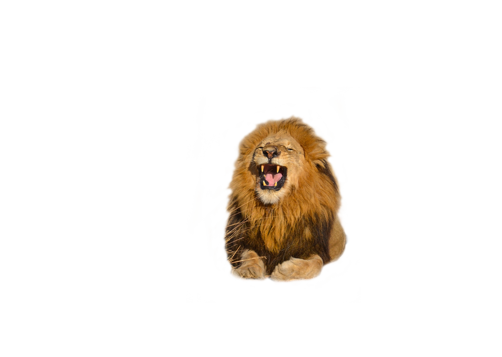 Download Free High quality Lion Png Transparent Images