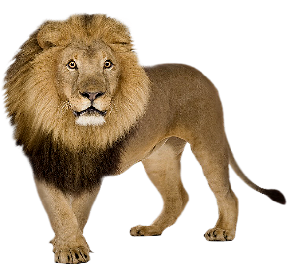 Png Format Images Of Lion image #42296