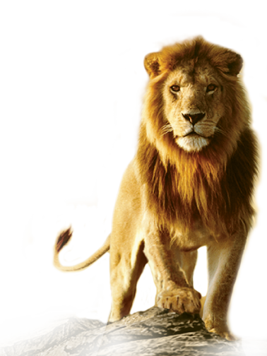 PNG Pic Lion