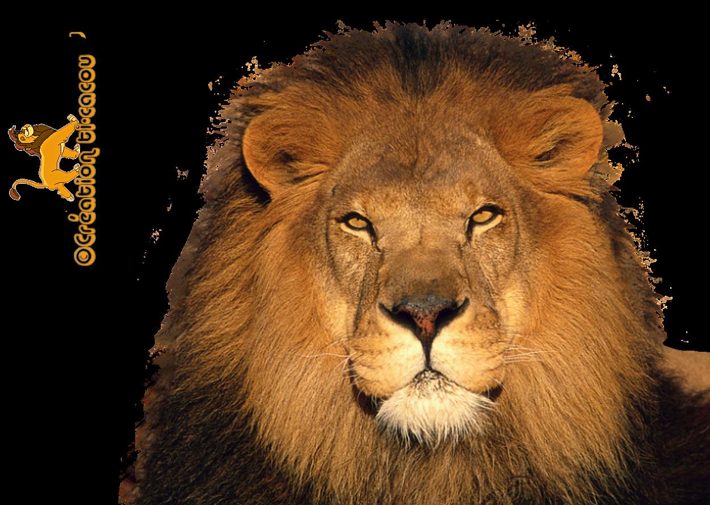 Lion Png Render
