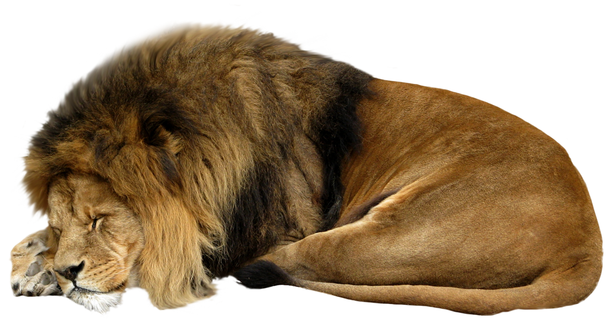 Lion sleeping png #42279 - Free Icons and PNG Backgrounds