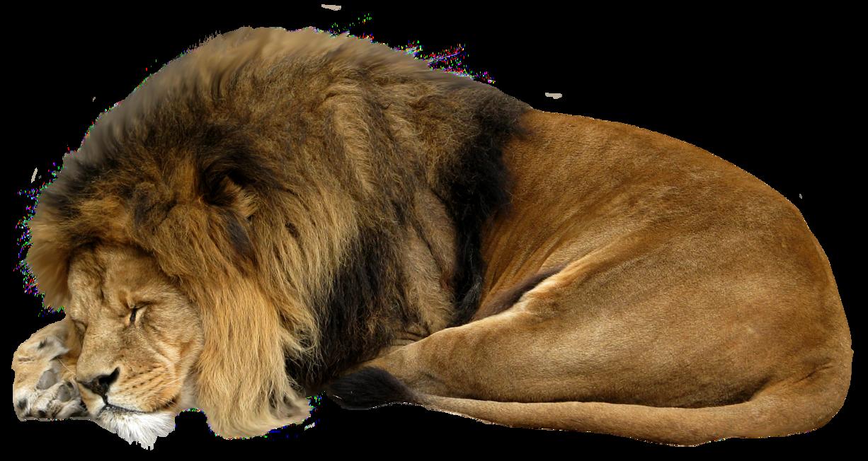 Lion sleeping png #422...