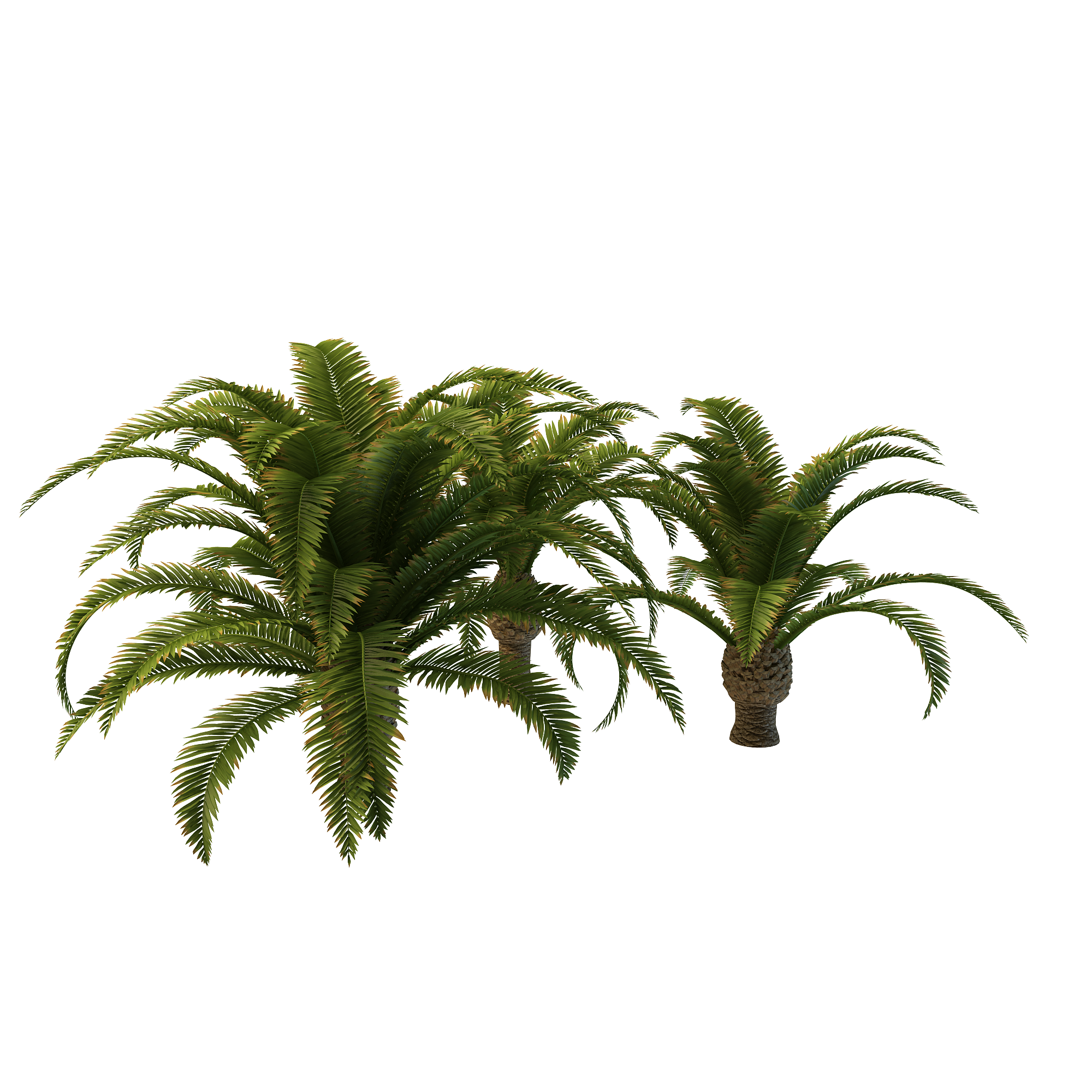 Long Palm Tree Clipart Png image #43079