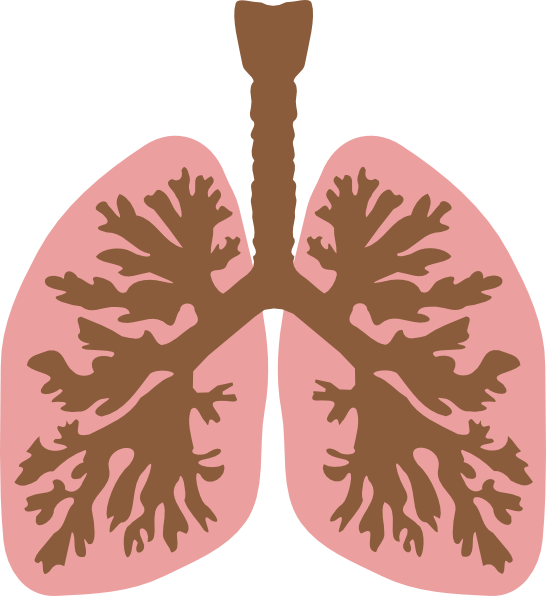 Lung Clipart PNG
