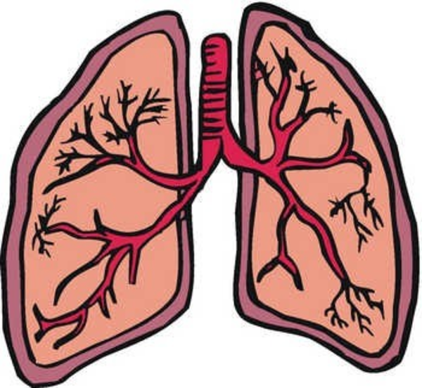 HD Lung PNG