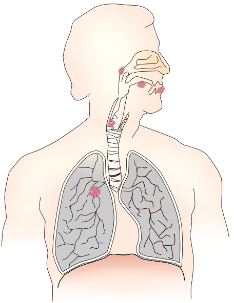 Lung Png image #25422
