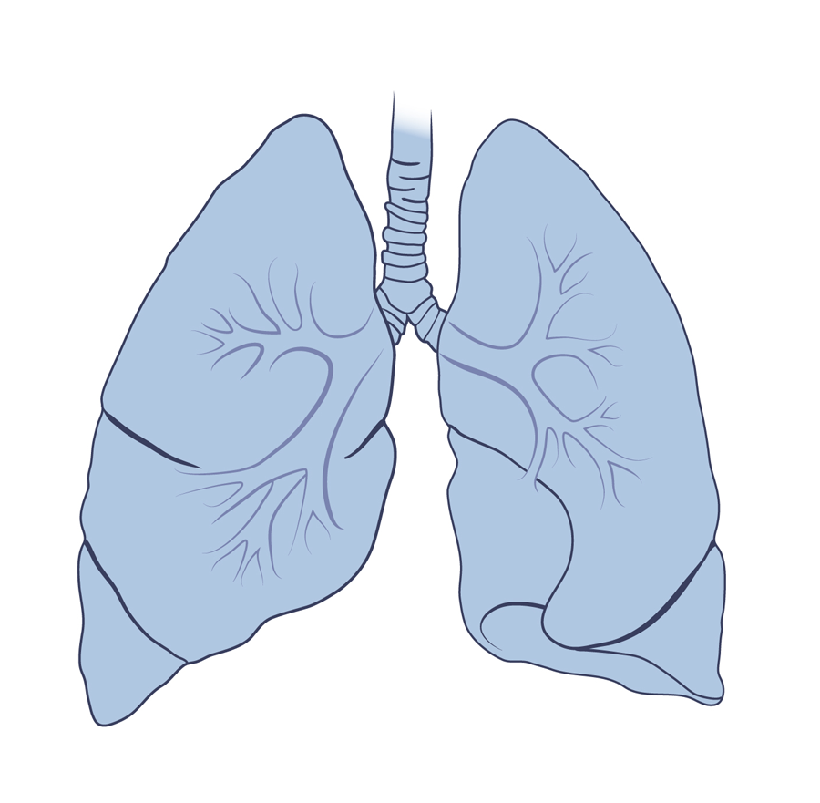 Lung Png image #25424