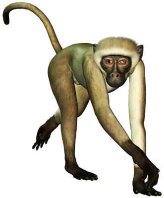 Monkey In Png image #26153