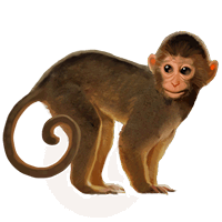 Free Download Monkey Png Images image #26159