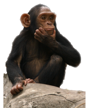 Download Png Clipart Monkey image #26143