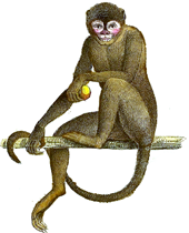 Transparent Monkey Background Hd Png image #26172