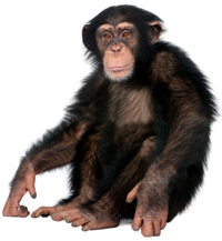 Monkey Png Collection Clipart image #26173