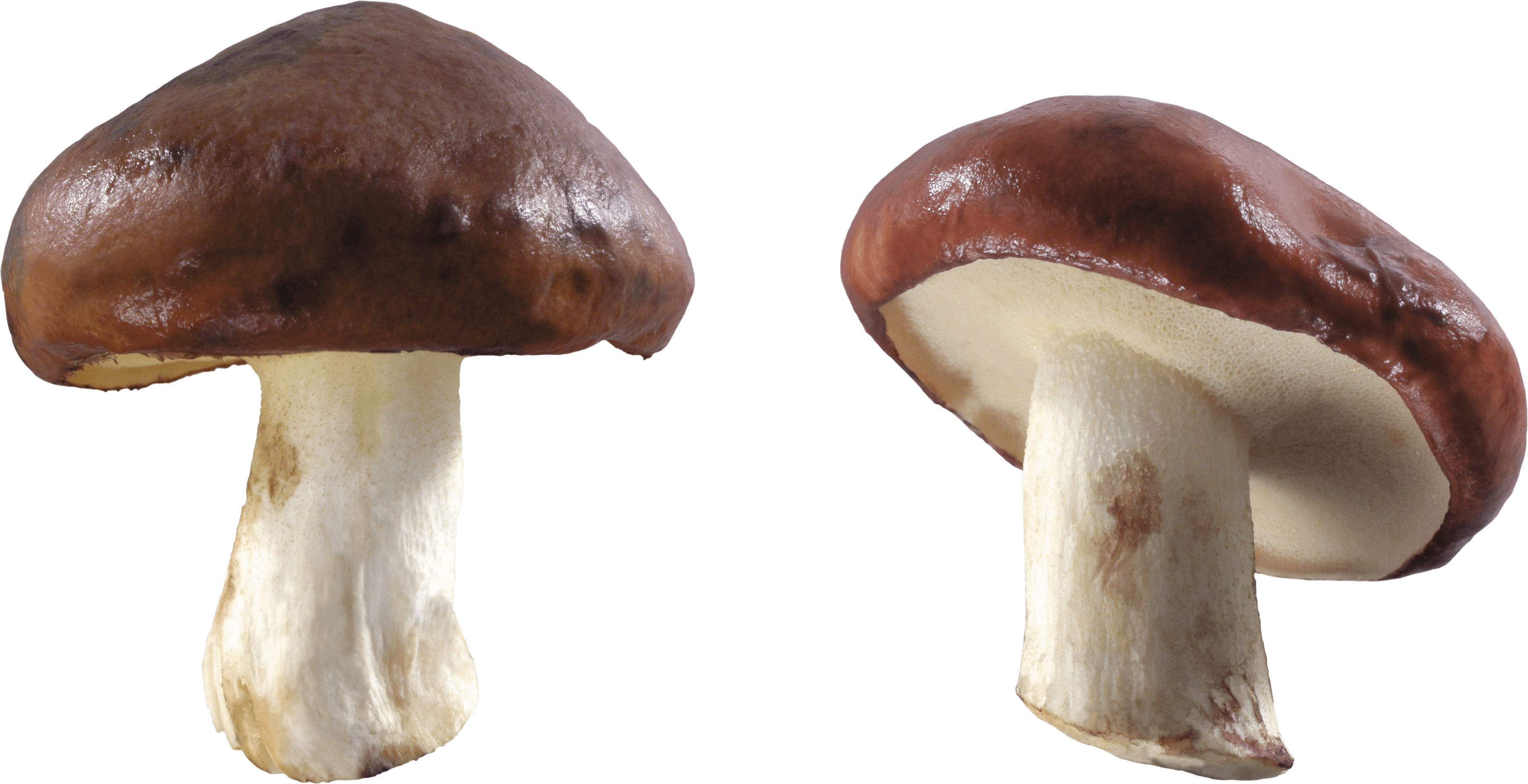 Free download mushroom images 42872 free icons and png backgrounds free download mushroom images toneelgroepblik Image collections