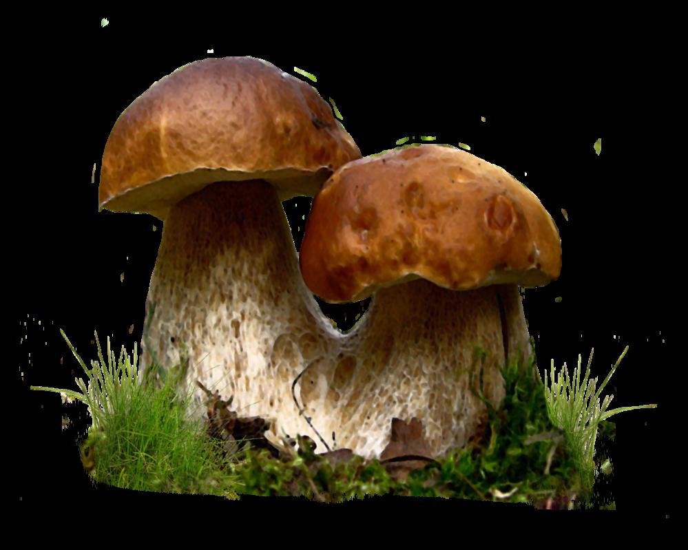 mushroom png photo