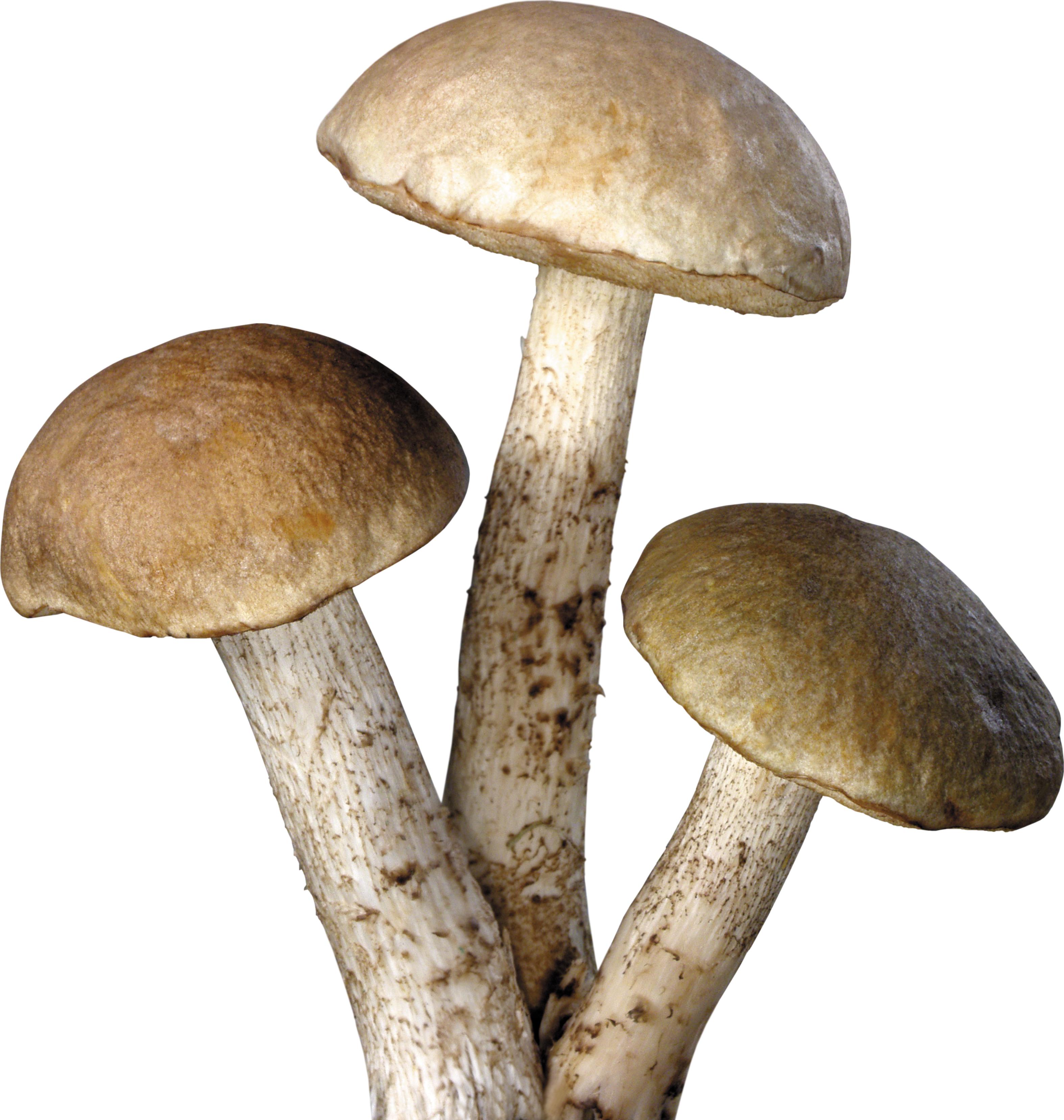 Mushroom PNG Transparent