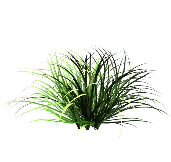 Nature Tall Grass Png