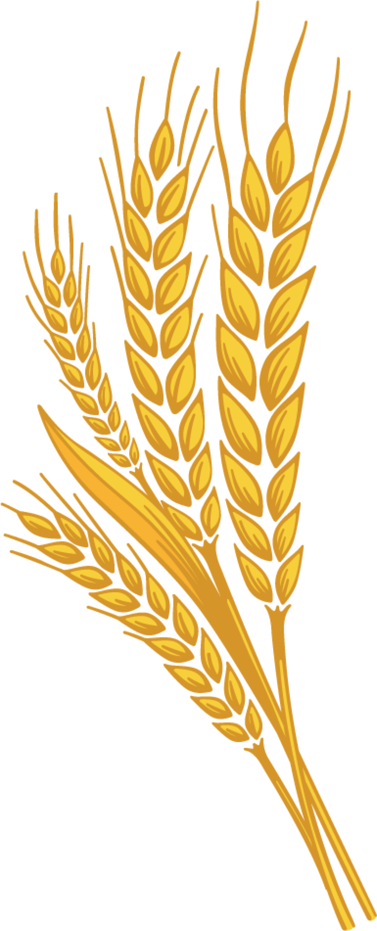 Wheat Leaf Pic