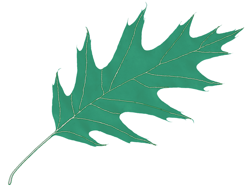 Oak Leaf Icon image #16504