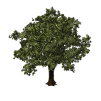 Oak Tree Save Icon Format