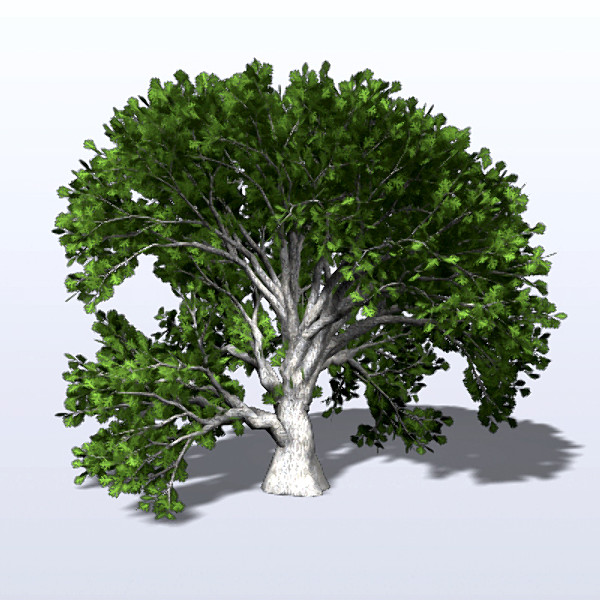 Png Oak Tree Download Icon image #16494