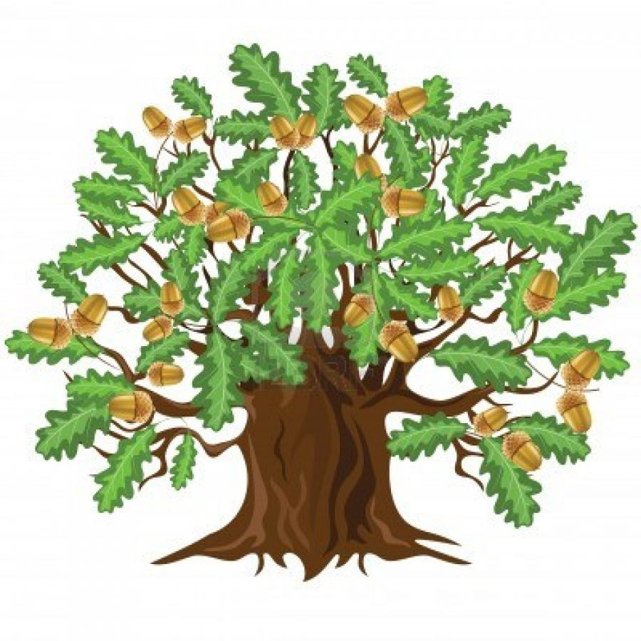 Icons Png Download Oak Tree image #16497