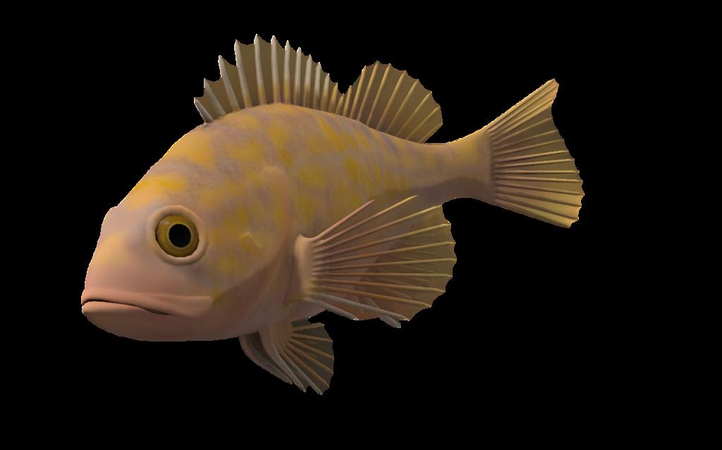 Ocean Fish Png