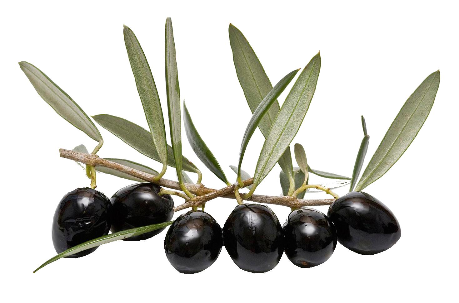 Olive Leaf Png image #38620