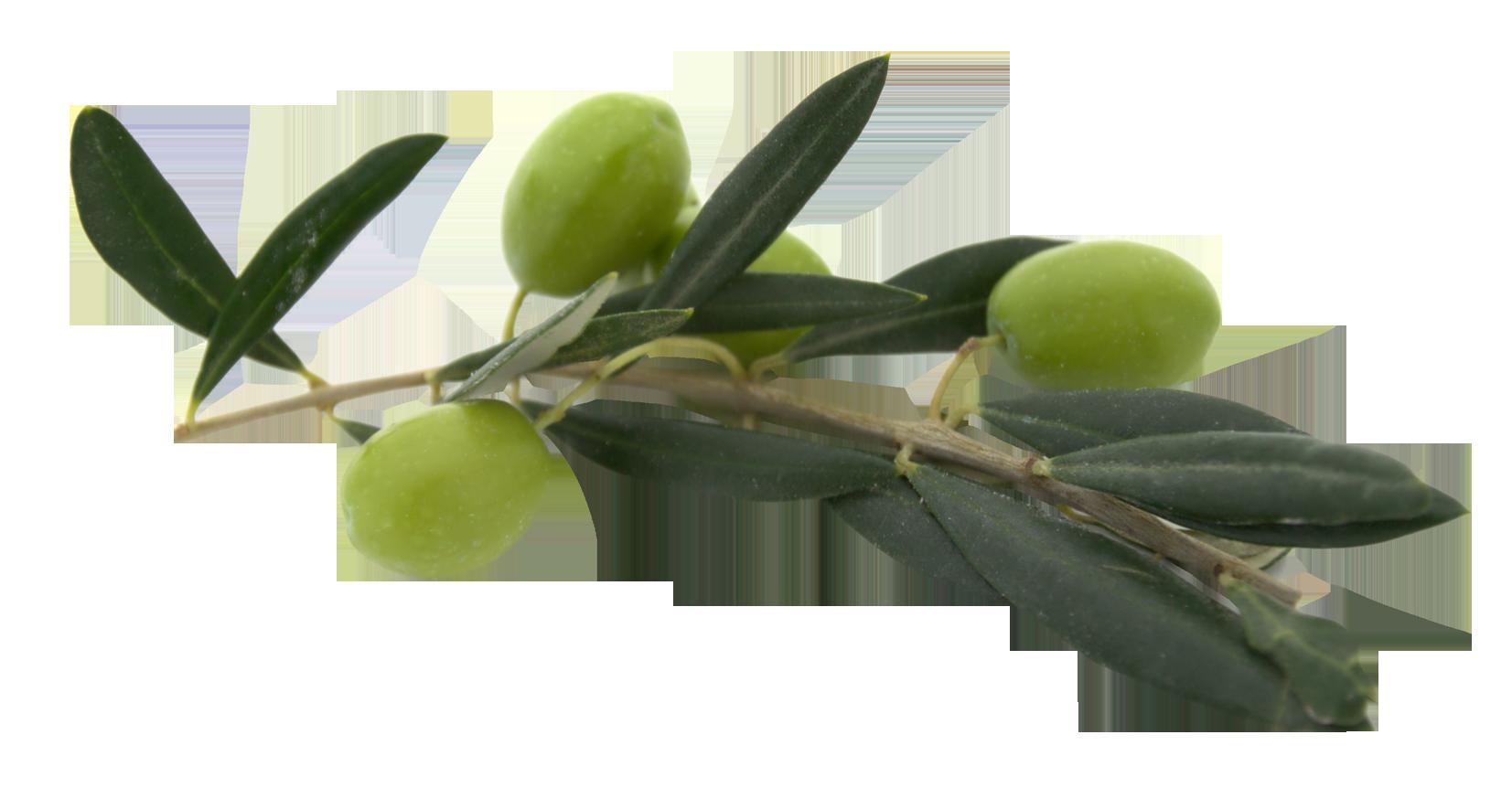 Olives Png image #40552