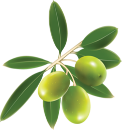 Collection Olives Clipart Png image #40570