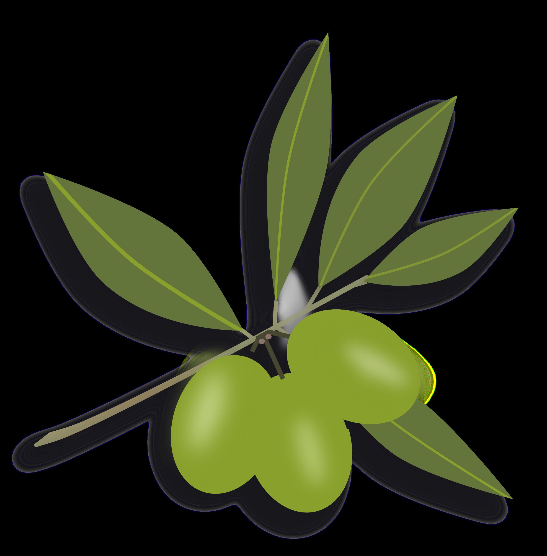 Olives Png image #40579