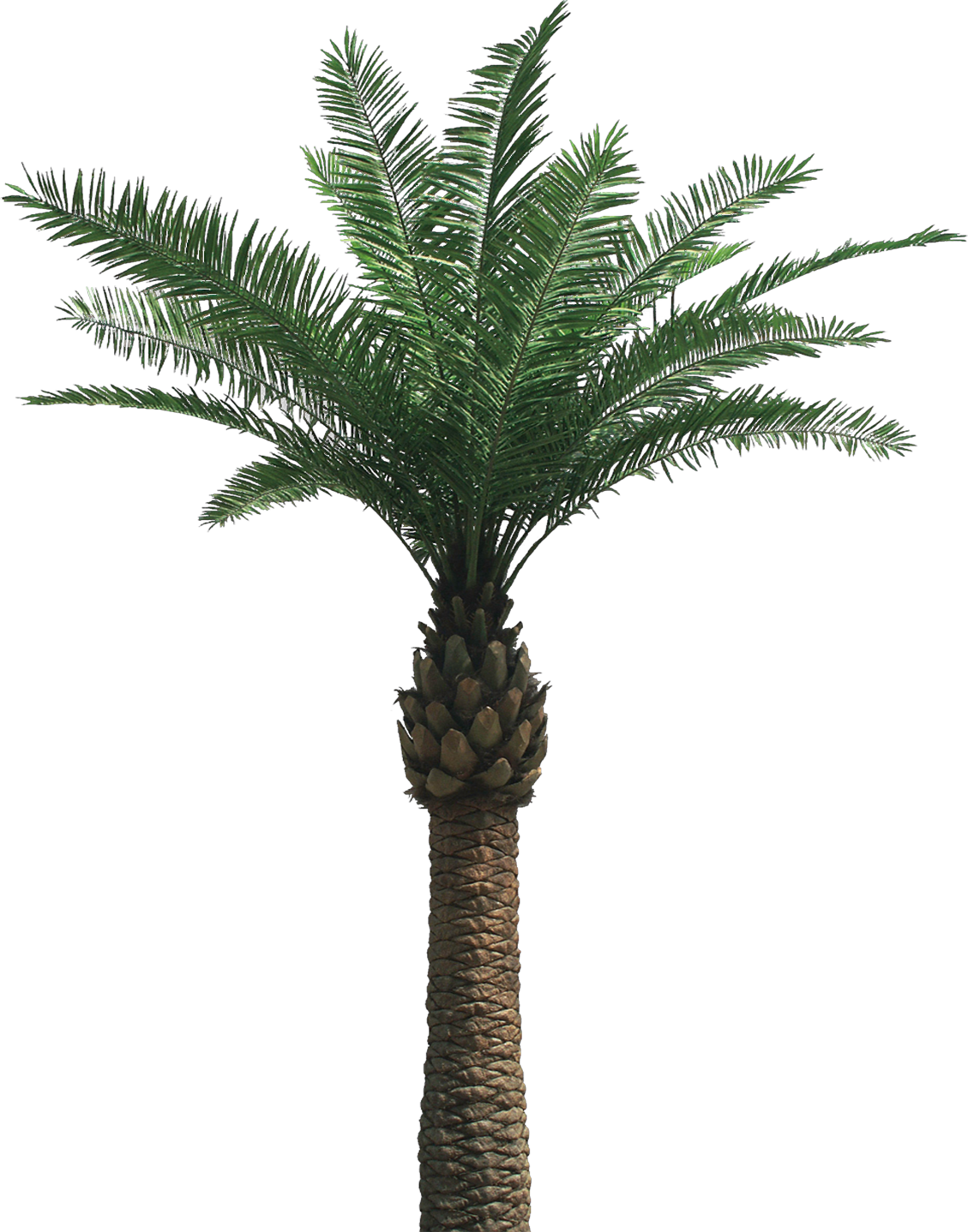 One Palm Tree Png