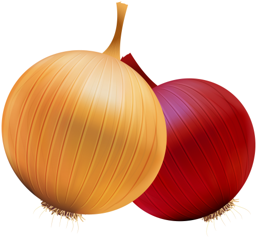 Free Download Of Onion Icon Clipart image #38733