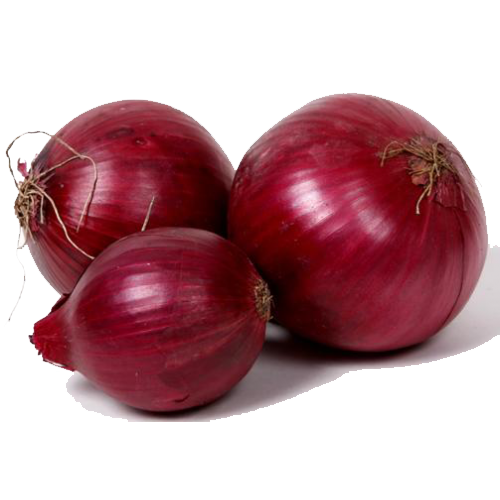 Onion Vector Png image #38743