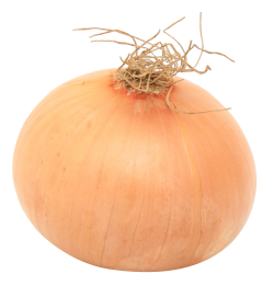 Onion In Png image #38748