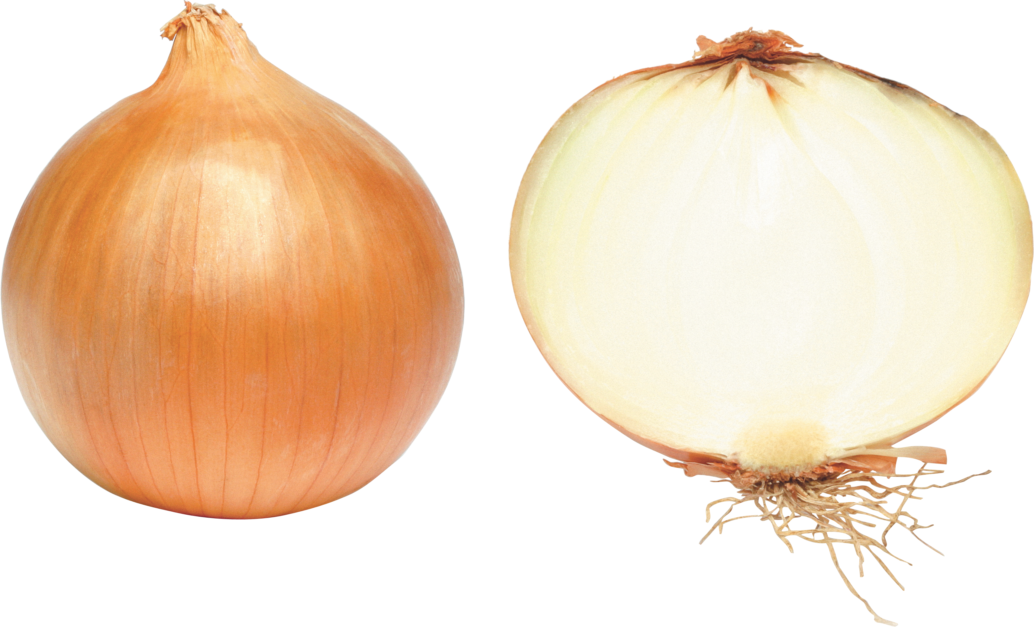 Download Onion Latest Version 2018 image #38762