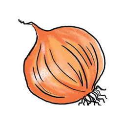 Png Onion Vector image #38765