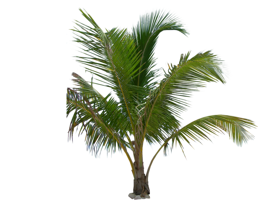 Palm Leaf Png