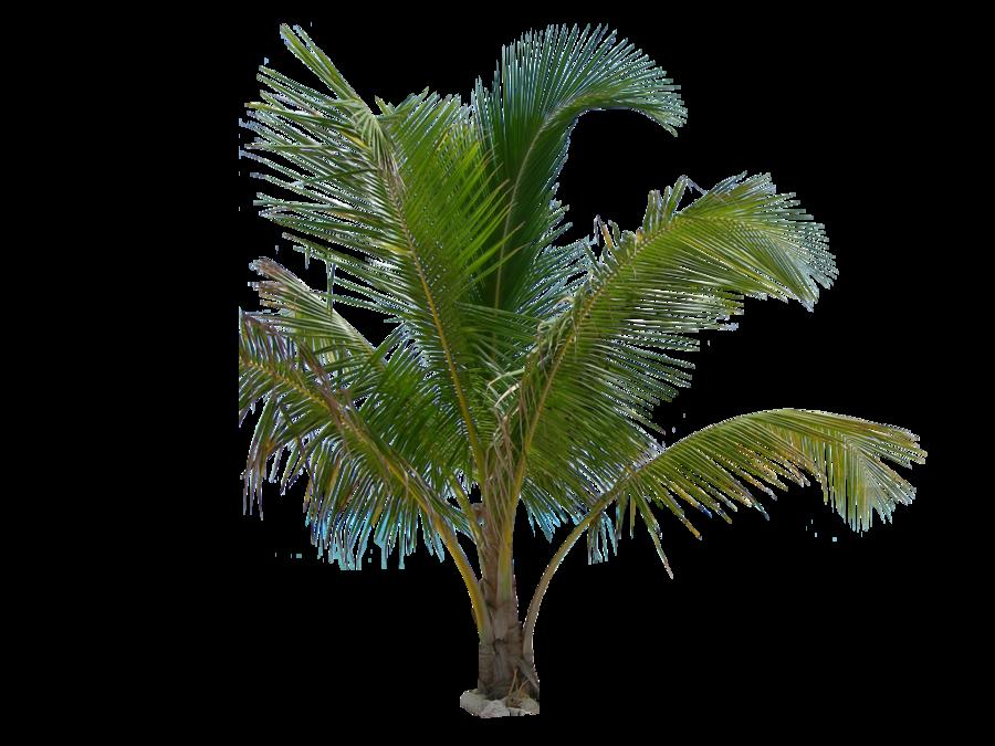 palm leaf png  43054