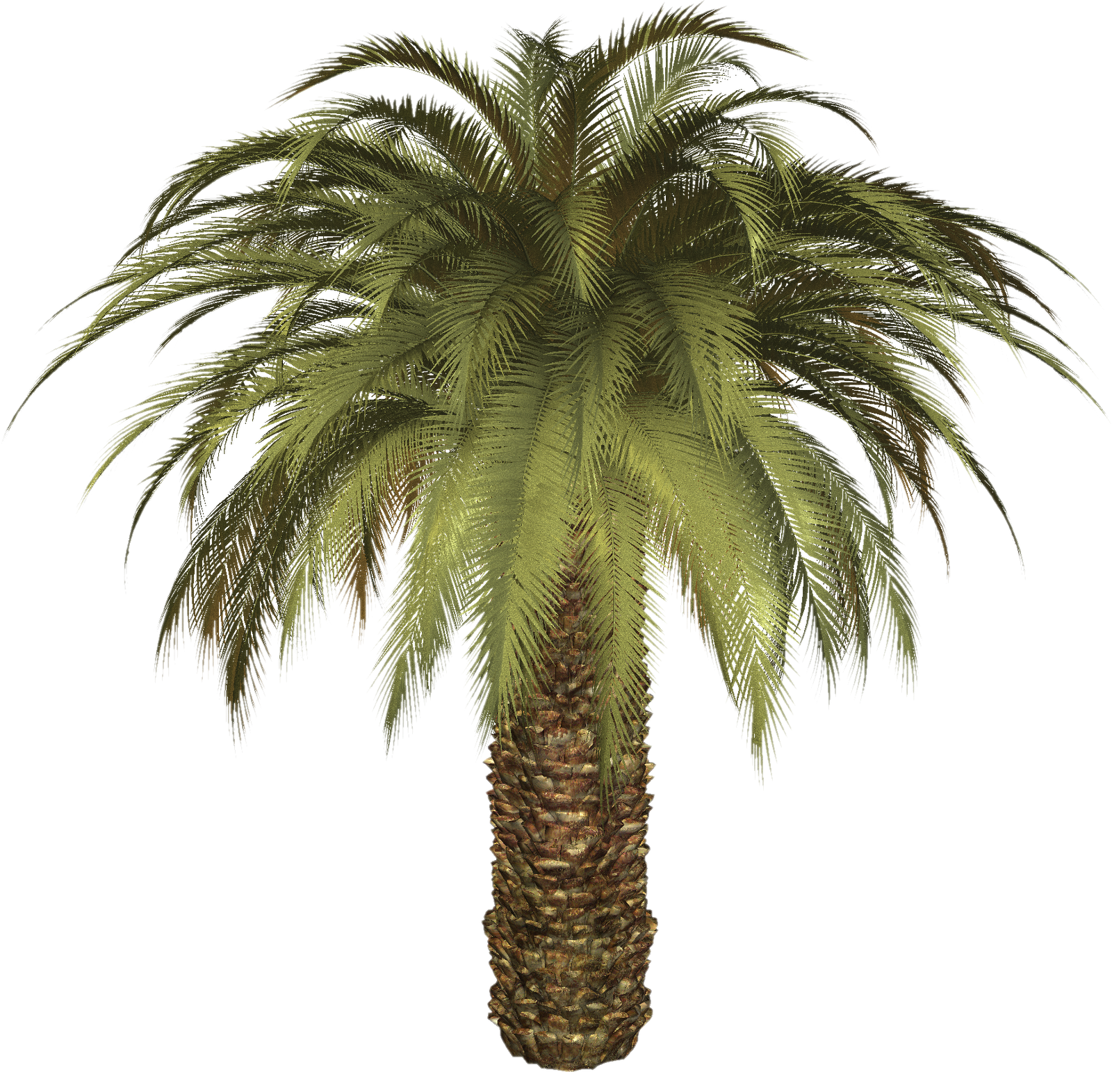 Palm Tree Image Png image #43058