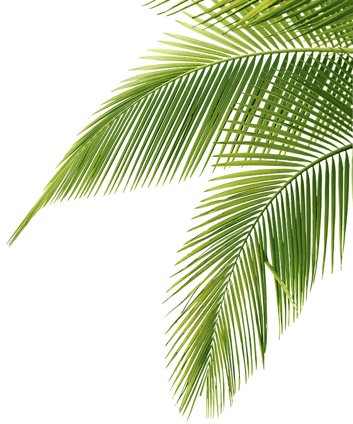 Palm Tree Leaf Png image #43080